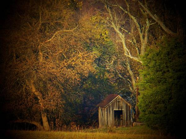 Wall Art - Photograph - Shed And Trees by Joyce Kimble Smith