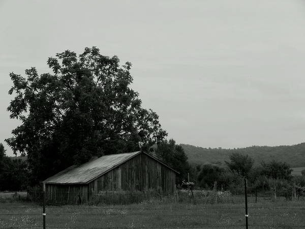 Photograph - Reduced Shed by Wild Thing
