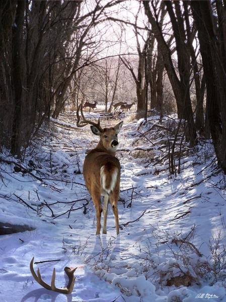 Deer Mixed Media - Shedding Time by Bill Stephens