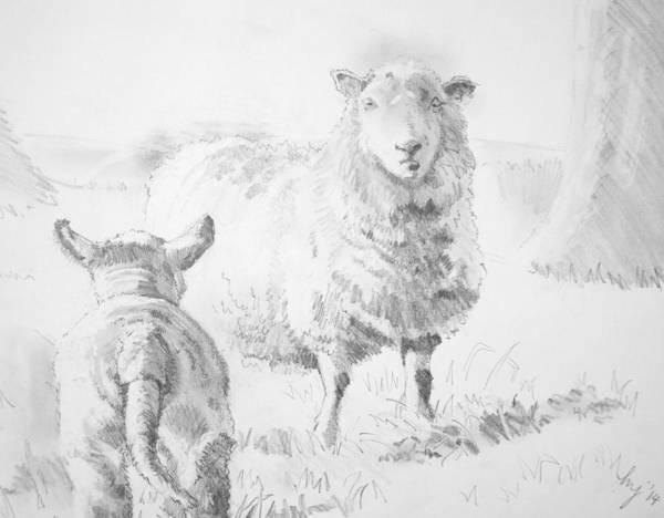 Drawing - Sheep And Lamb Drawing by Mike Jory