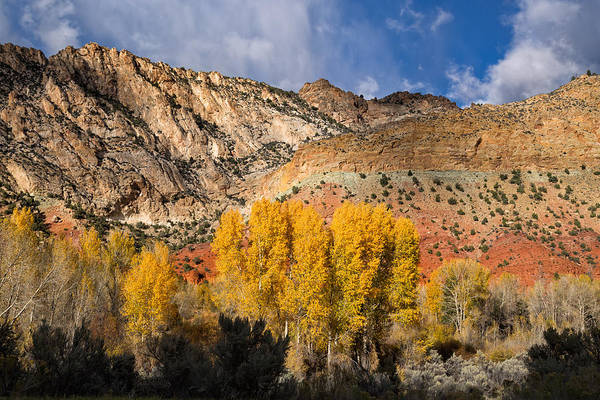 Uinta Photograph - Sheep Canyon In Autumn by Kathleen Bishop