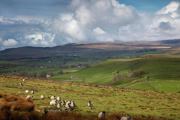 Grazing Photograph - Sheep Grazing In A Field With Storm by John Short / Design Pics