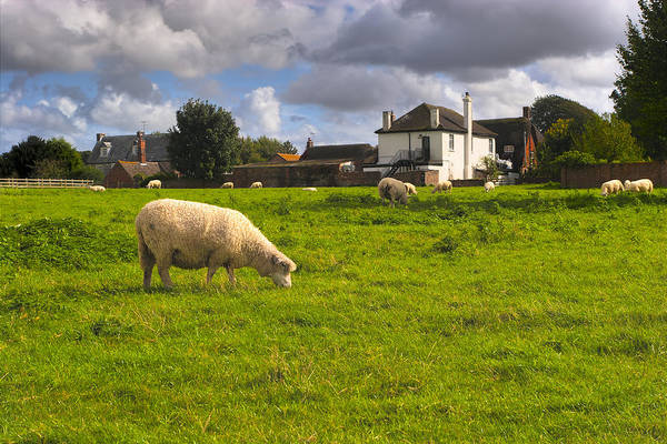 Photograph - Sheep Grazing In The British Countryside - Avebury by Mark Tisdale
