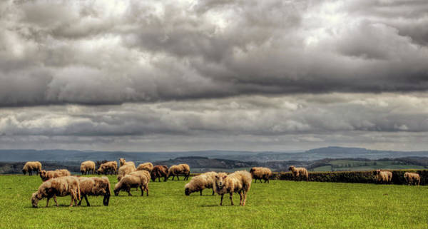 Grazing Photograph - Sheep  Grazing On A Mountain Pasture by Neil Howard