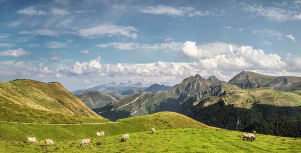 Grazing Photograph - Sheep Grazing, Saint-michel, Pyrenees by Manuel Sulzer