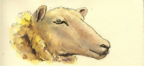 Head Painting - Sheep Head Study by Juan  Bosco