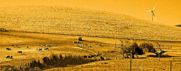 Photograph - Sheep In A Sepia Sunrise by Joseph Coulombe