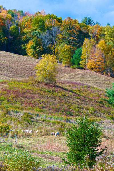 Photograph - Sheep Meadow In Autumn by Kristin Hatt