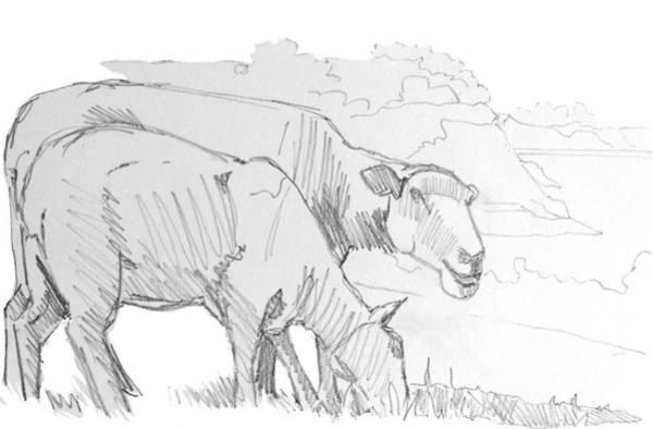 Quaint Drawing - Sheep Pencil Drawing  by Mike Jory