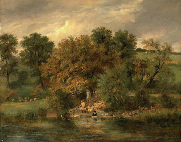 Riverbank Drawing - Sheep Washing At Postwick Grove, Norwich by Litz Collection