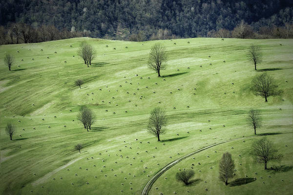 Foliage Photograph - Sheeps ... by Anna Cseresnjes