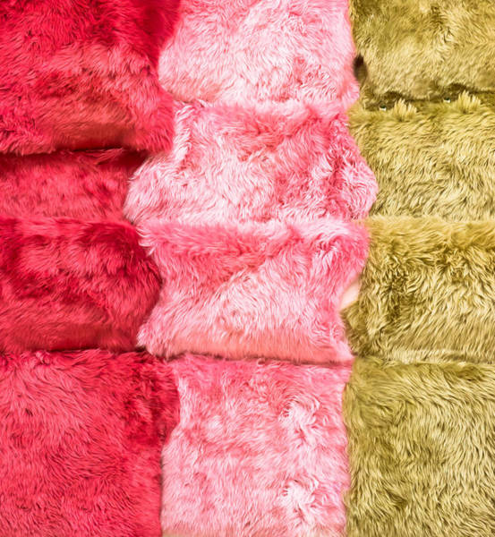 Wall Art - Photograph - Sheepskin Rugs by Tom Gowanlock