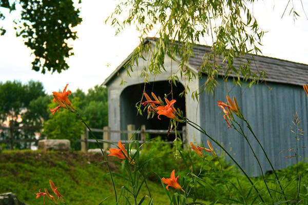Photograph - Sheffield Covered Bridge Behind The Daylilies by Kristin Hatt