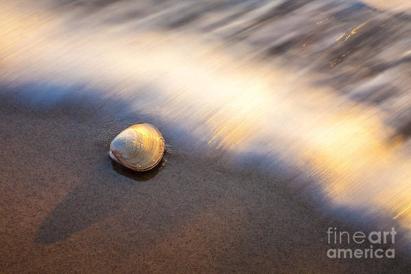 Photograph - Shell And Surf by Susan Cole Kelly