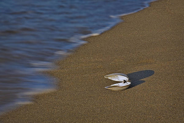 Photograph - Shell By The Shore by Susan Candelario