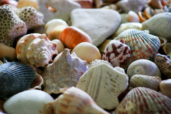 Photograph - Shell Collection by Marty Gayler