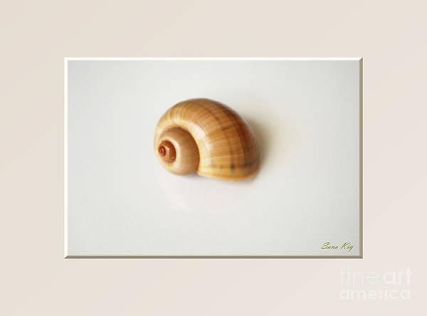 Photograph - Shell. Delicate Colors by Oksana Semenchenko