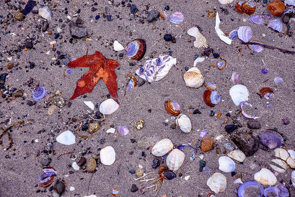 Photograph - Shell Deposit by Roxy Hurtubise