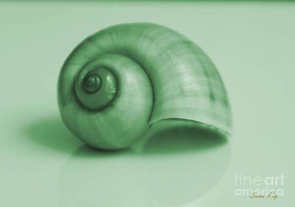 Shell. Light Green Art Print