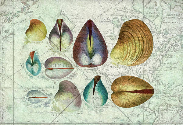 Beach Collage Painting - Shell Map I by Cora Niele