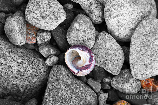 Photograph - Shell On The Shore 2 by James Brunker