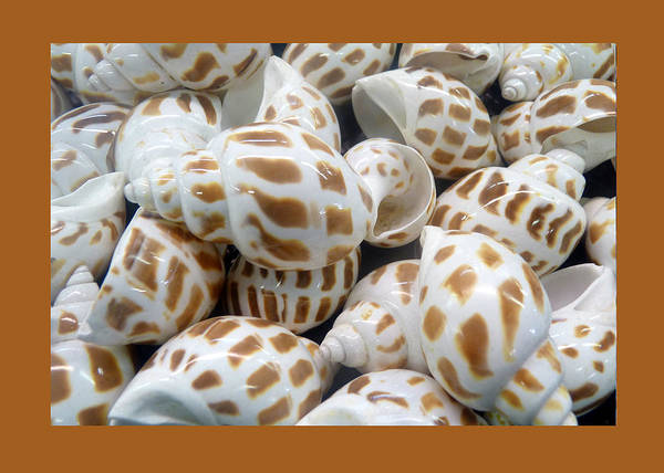 Wall Art - Photograph - Shells - 7 by Carla Parris
