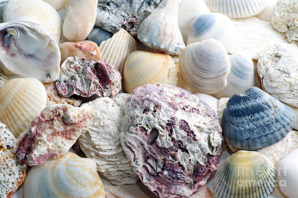 Photograph - Shells From The Sea by Andee Design