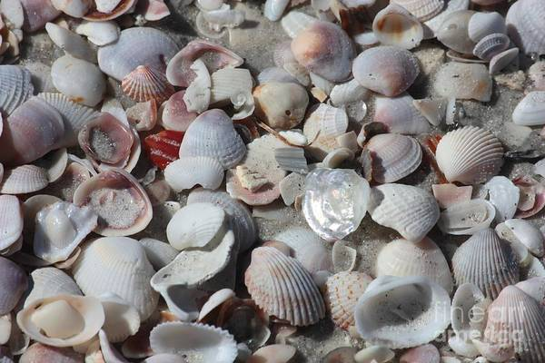 Cockle Wall Art - Photograph - Shells On Treasure Island by Carol Groenen