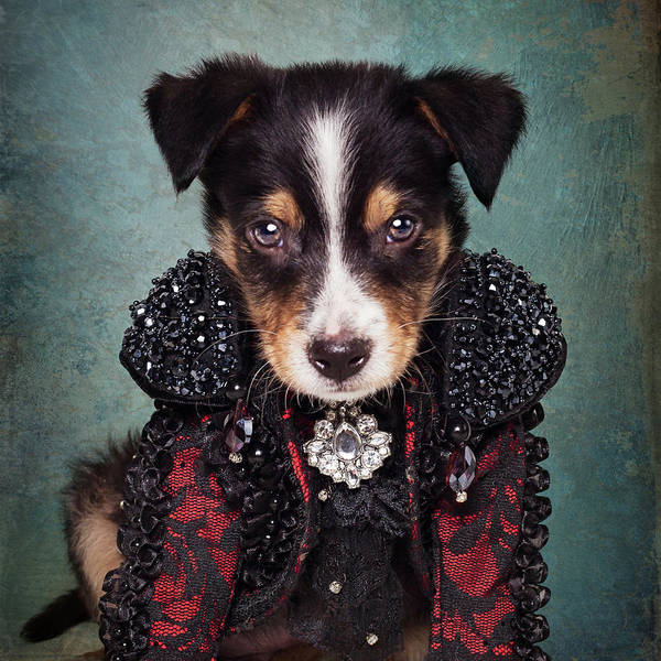 Wall Art - Photograph - Shelter Pets Project - Loki by Tammy Swarek