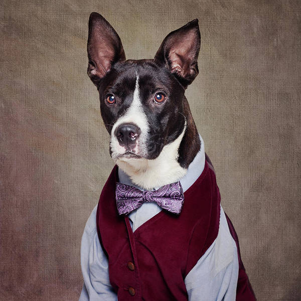 Wall Art - Photograph - Shelter Pets Project - Petey by Tammy Swarek