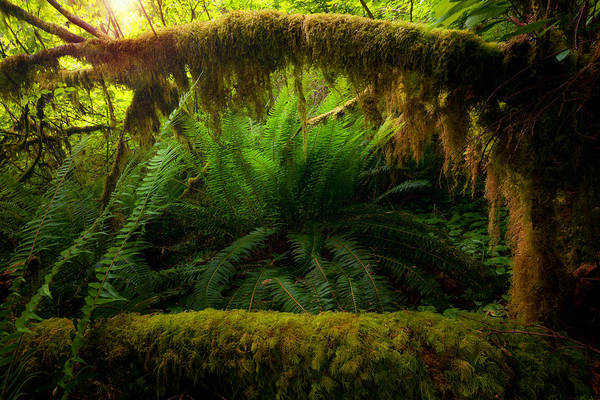 Photograph - Sheltered Fern by Andrew Kumler