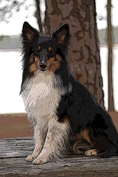 Digital Art - Sheltie Art01 by Donald Williams