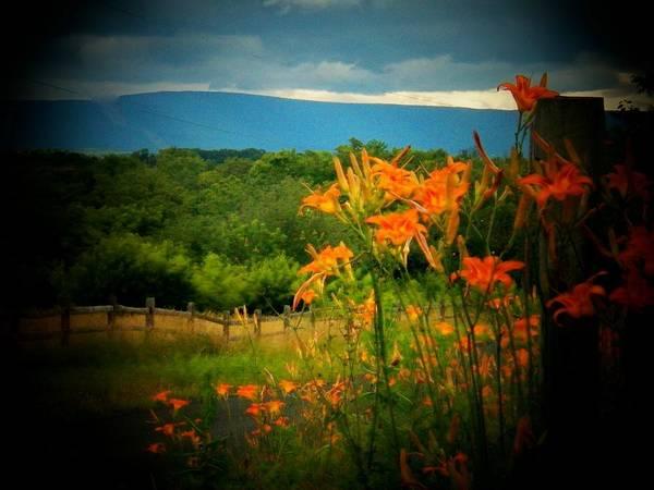 Frederick County Wall Art - Photograph - Shenandoah Lilies by Joyce Kimble Smith