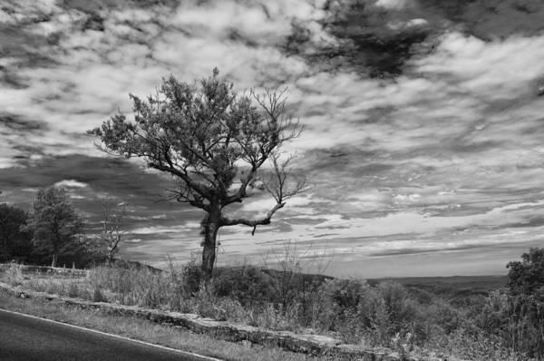Photograph - Shenandoah National Park 16554b by Guy Whiteley