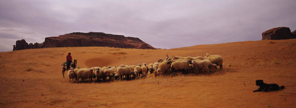 Wall Art - Photograph - Shepherd Herding A Flock Of Sheep by Animal Images