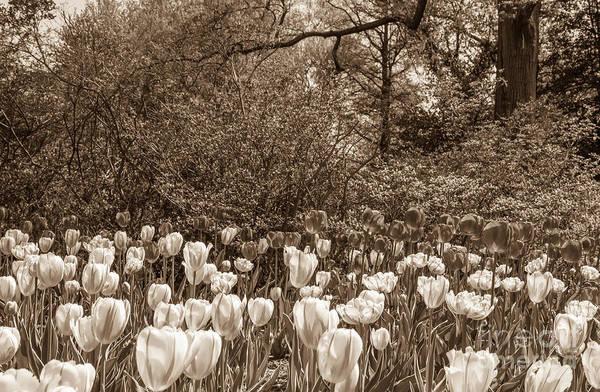Photograph - Sherwood Gardens 1 by Chris Scroggins