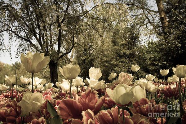 Photograph - Sherwood Gardens 7 by Chris Scroggins