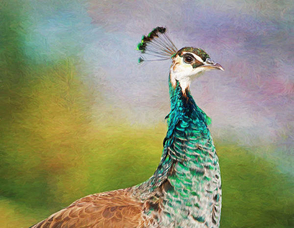Pheasant Photograph - She's A Lady by Donna Kennedy