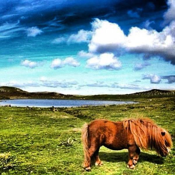 Wall Art - Photograph - Shetland Islands - Scotland by Luisa Azzolini