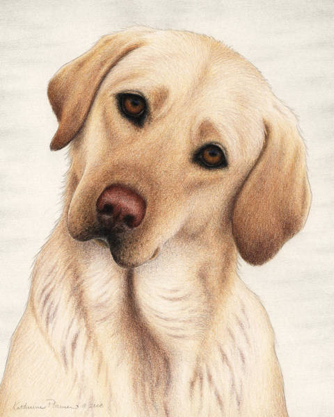 Wall Art - Drawing - Shiloh by Katherine Plumer