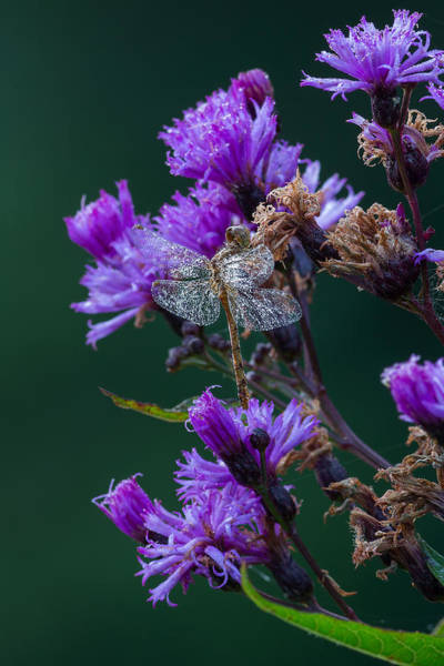Photograph - Shimmering Dew by Dale Kincaid