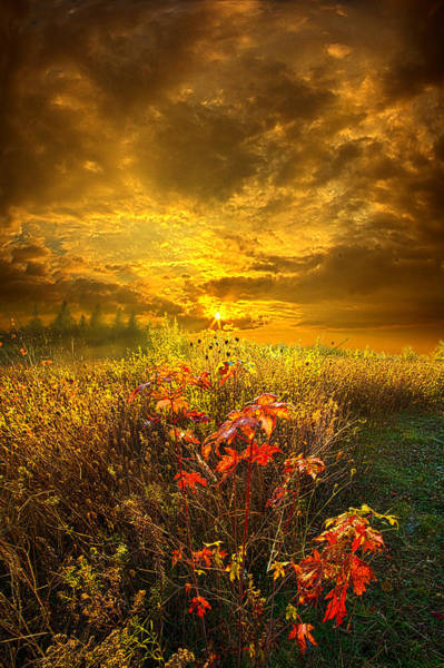Photograph - Shine Your Light For The World To See by Phil Koch