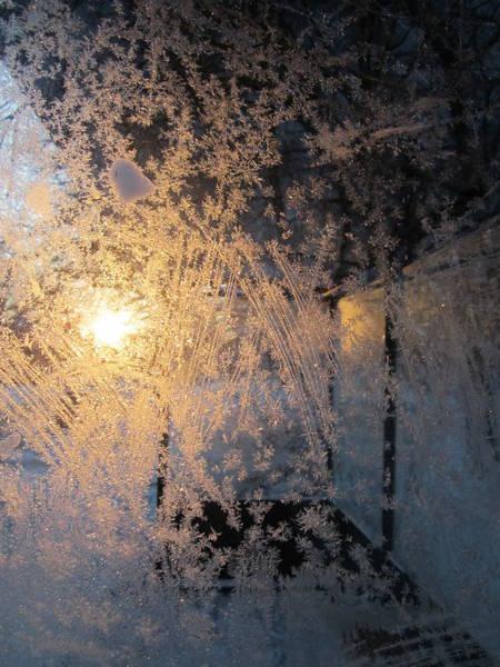 Shines Through And Illuminates The Day Art Print