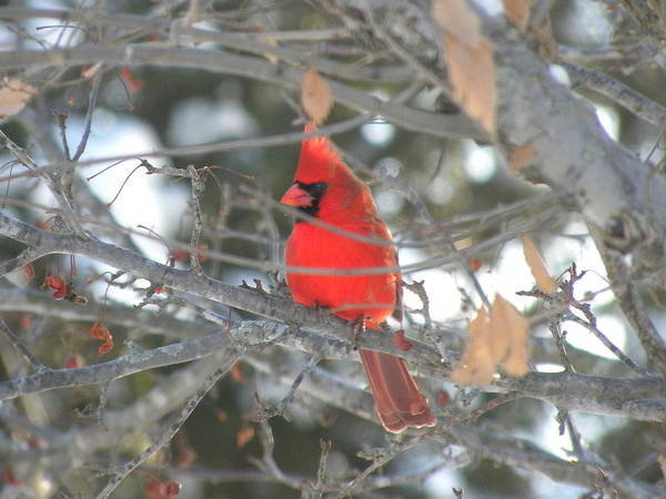 Photograph - Shining Bright Red by Peggy  McDonald