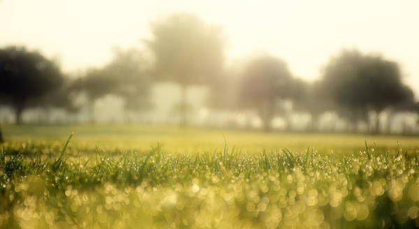 Brillante Photograph - Shinning Morning From The Grass by HQ Photo