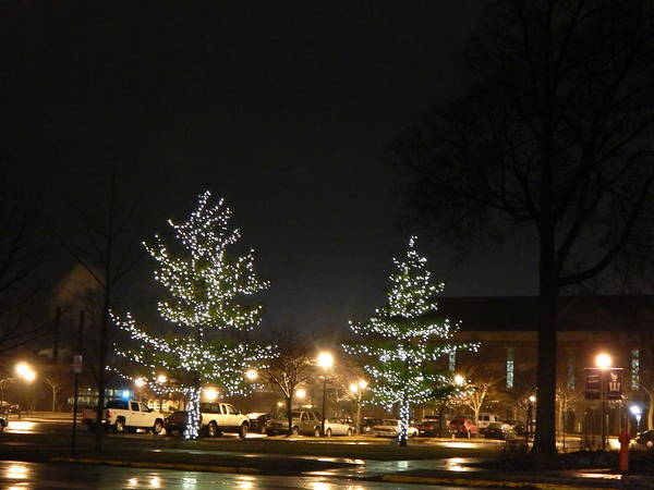 Photograph - Shiny Christmas Campus by Wild Thing