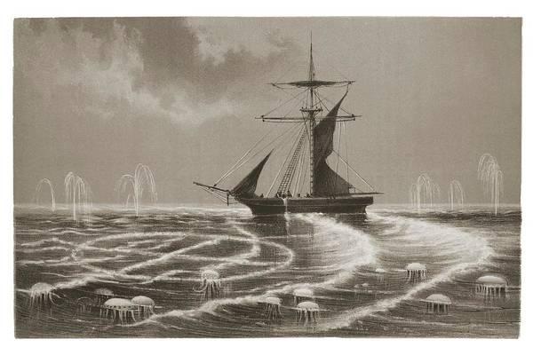 Moon Jellyfish Photograph - Ship Sailing Through Bioluminscence Bloom by David Parker/science Photo Library