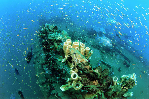 Trevally Photograph - Shipwreck Ecosystem by Matthew Oldfield/science Photo Library