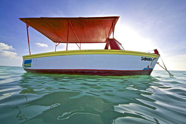 Photograph - Shomara Of Aruba by David Letts