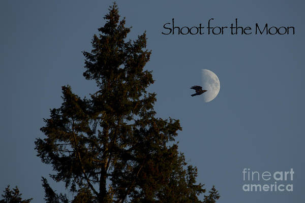 Photograph - Shoot For The Moon by Belinda Greb